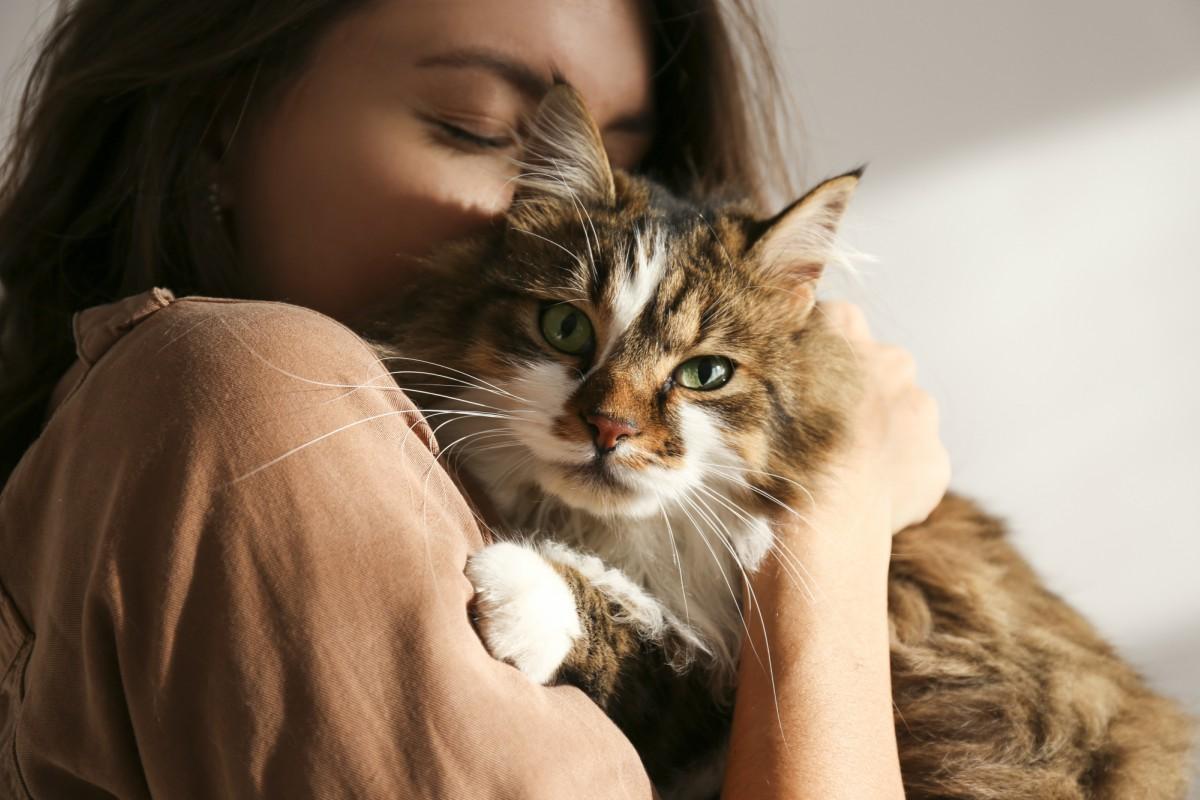gatto-atteggiamento