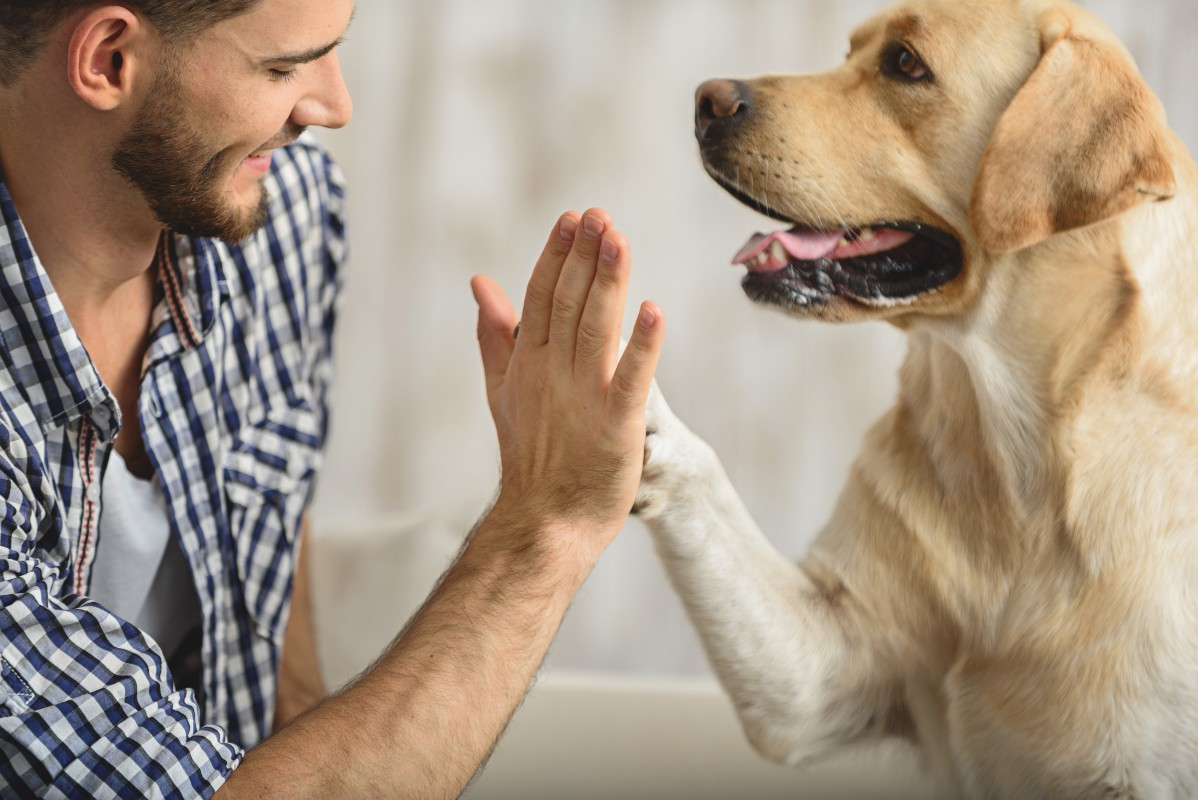 cane-comunicazione