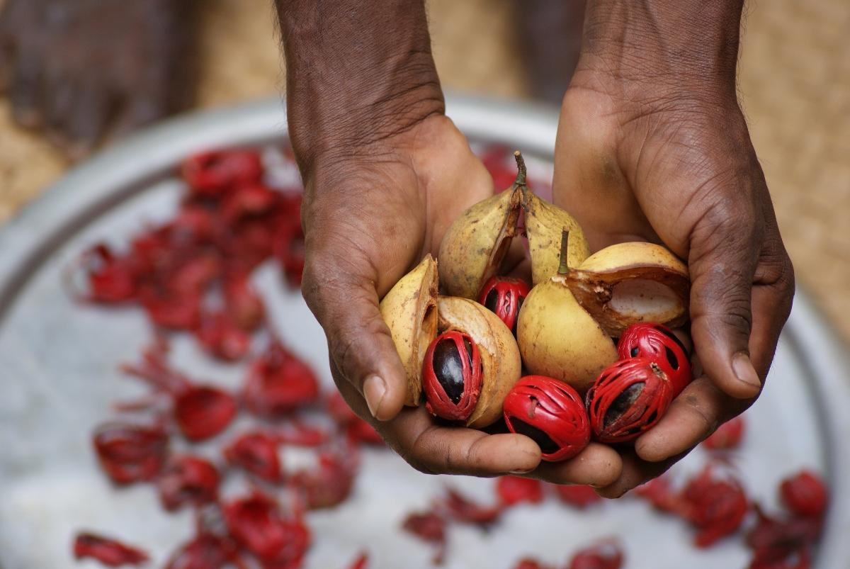 garcinia cambogia: benefici