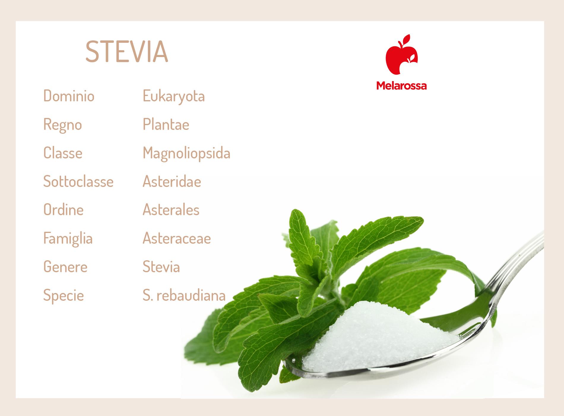 stevia: cos'è