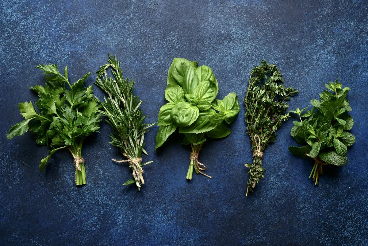 benefici e proprietà delle erbe aromatiche
