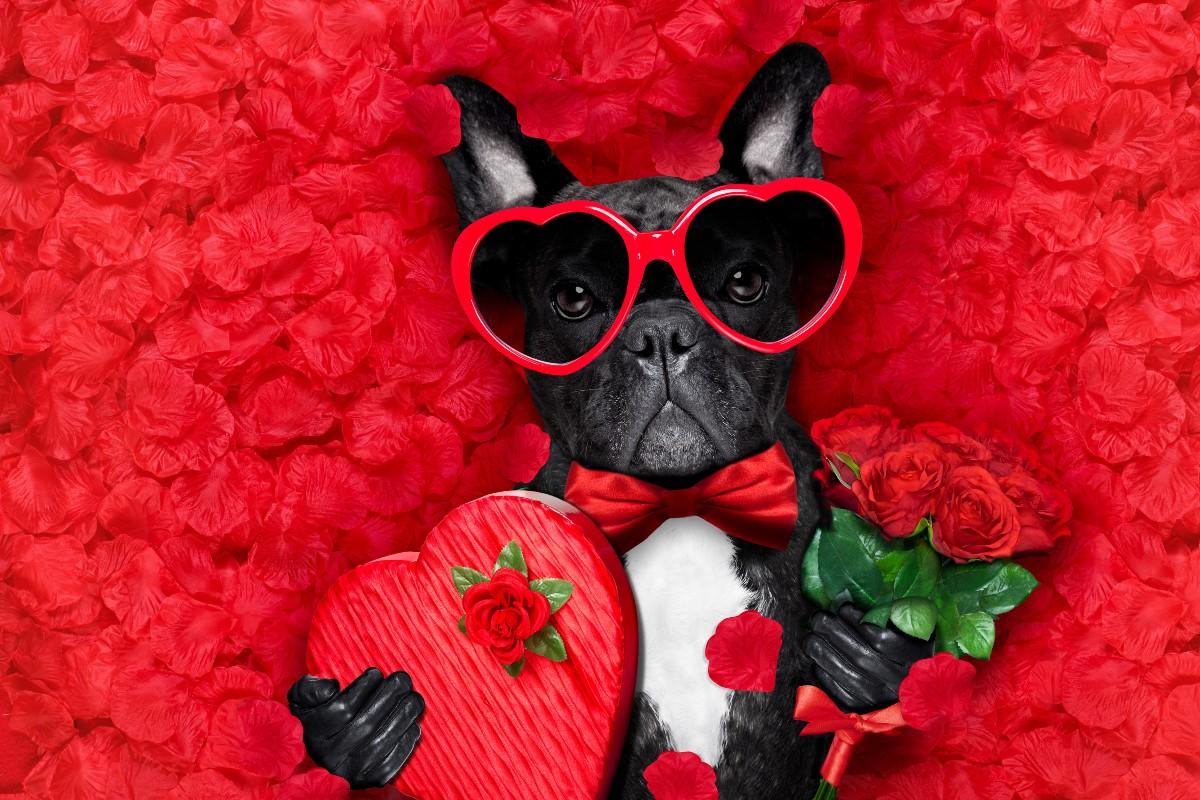 cane innamorato