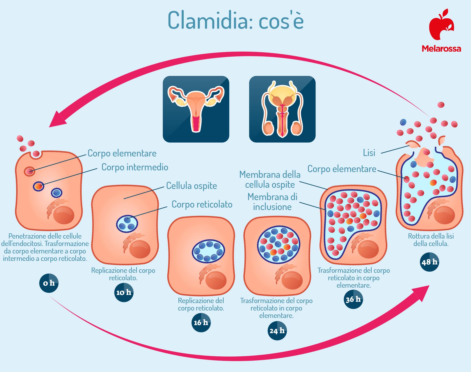 clamidia: cos'è