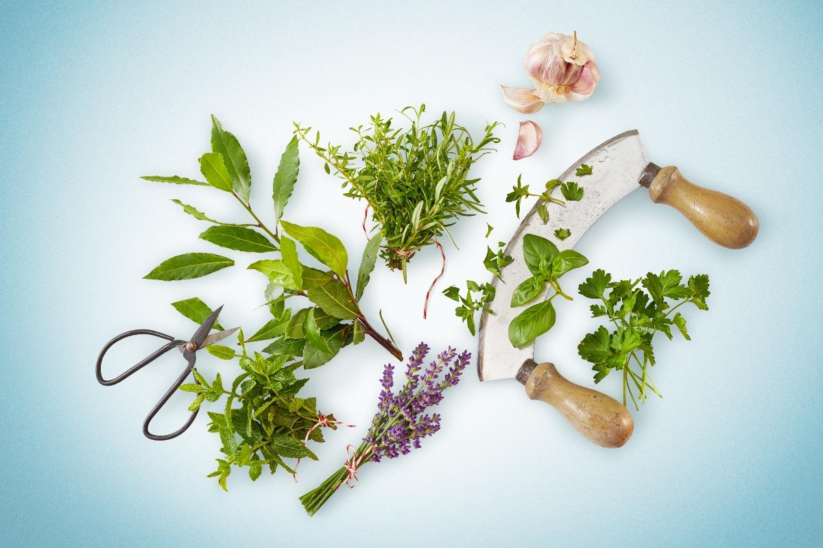 erbe aromatiche: benefici, come coltivarle e erbe aromatiche più usate in cucina