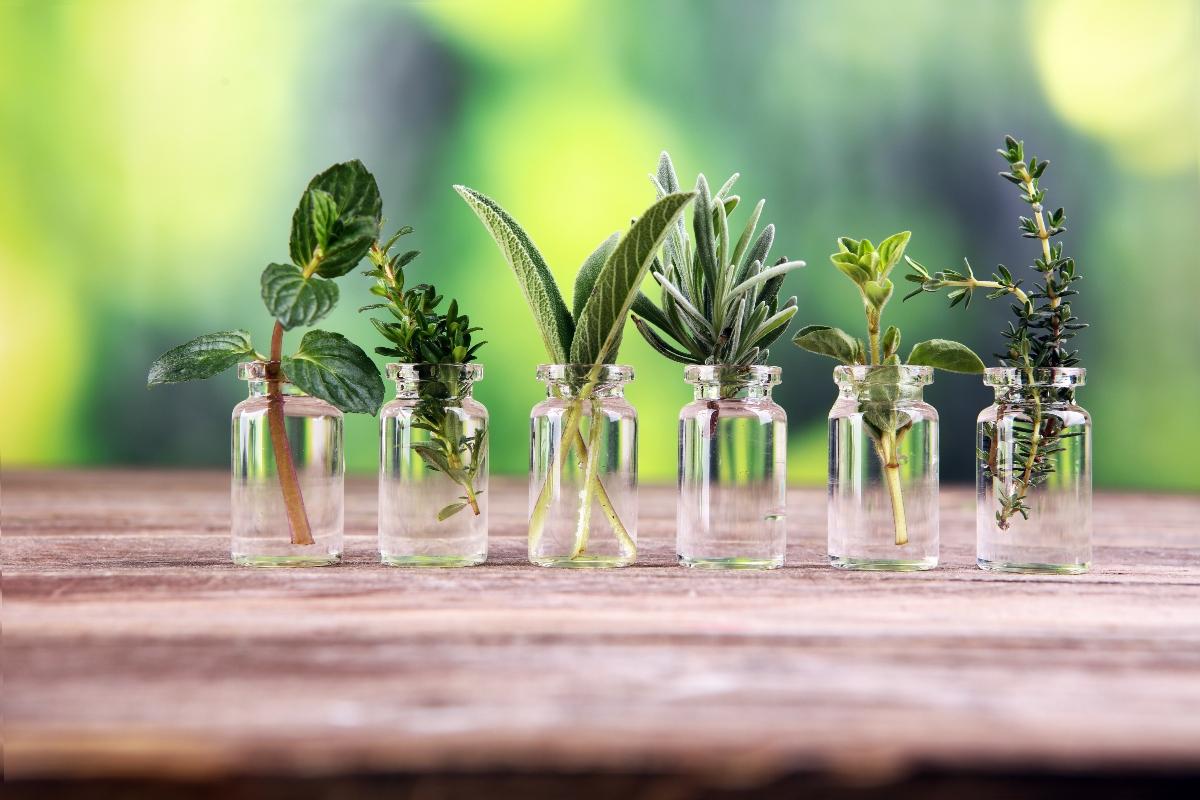 erbe aromatiche: come coltivarle