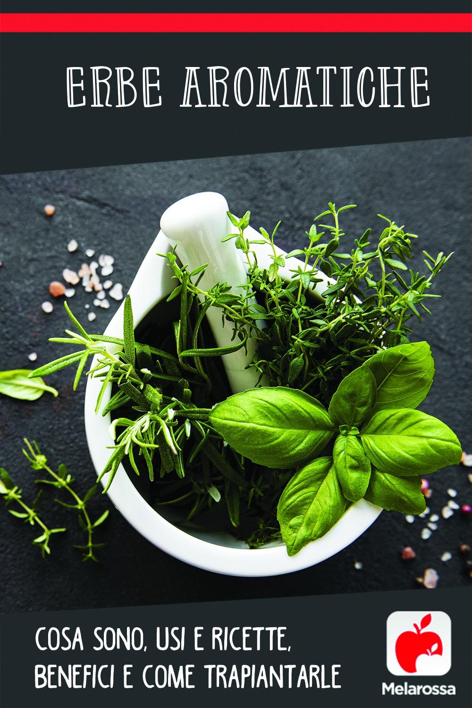 erbe aromatiche: cosa sono, usi, ricette, benefici, come trapiantarle