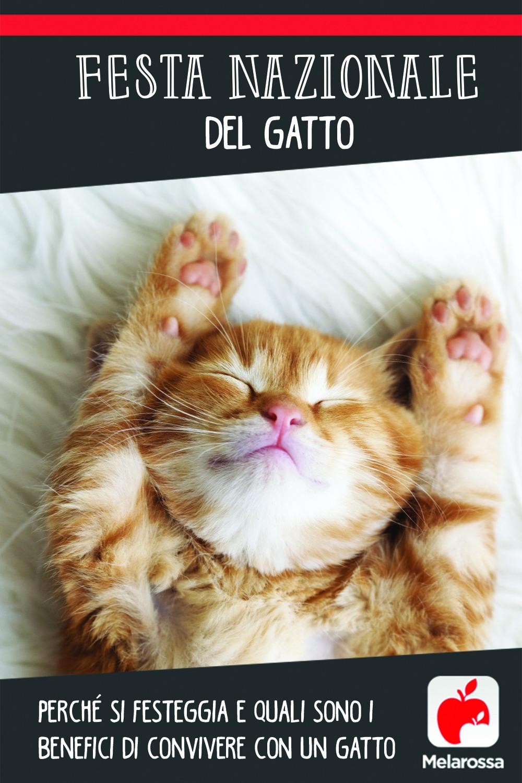 Giornata nazionale del gatto