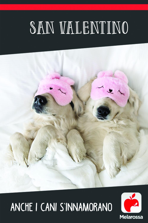 san valentino amore cani