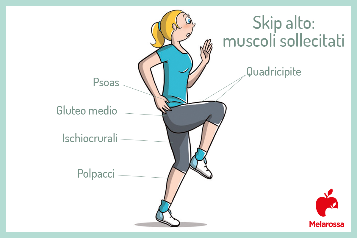 skip alto: muscoli sollecitati