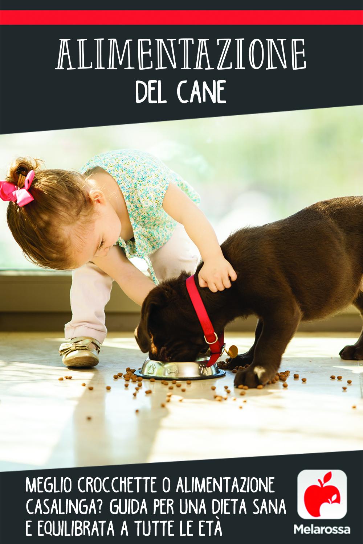 alimentazione del cane: guida  per una dieta sana e equilibrata a tutte le età