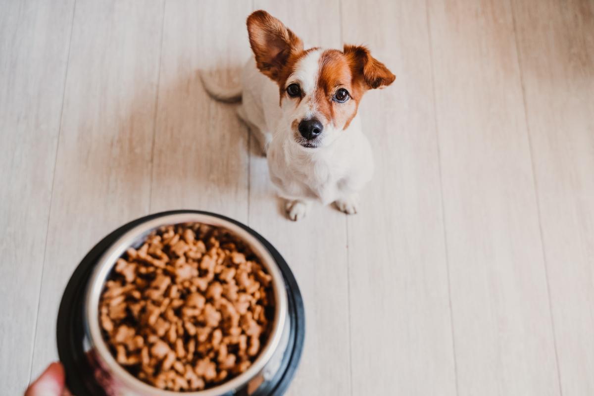 alimentazione del cane: cibo industriale