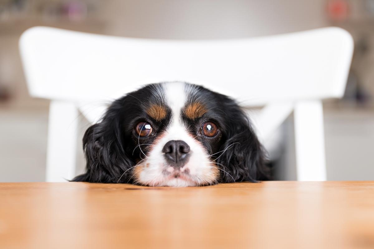 alimentazione del cane: come comportarsi