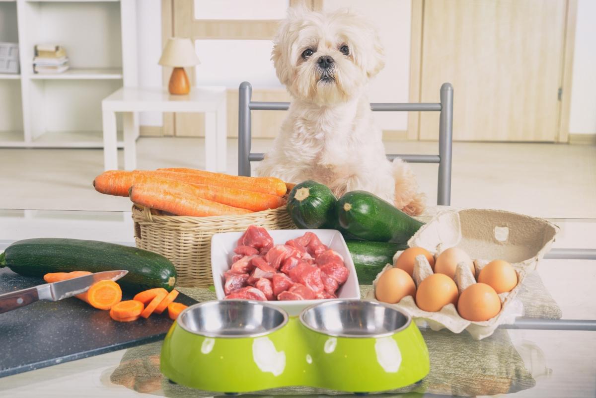 alimentazione del cane: dieta BARF