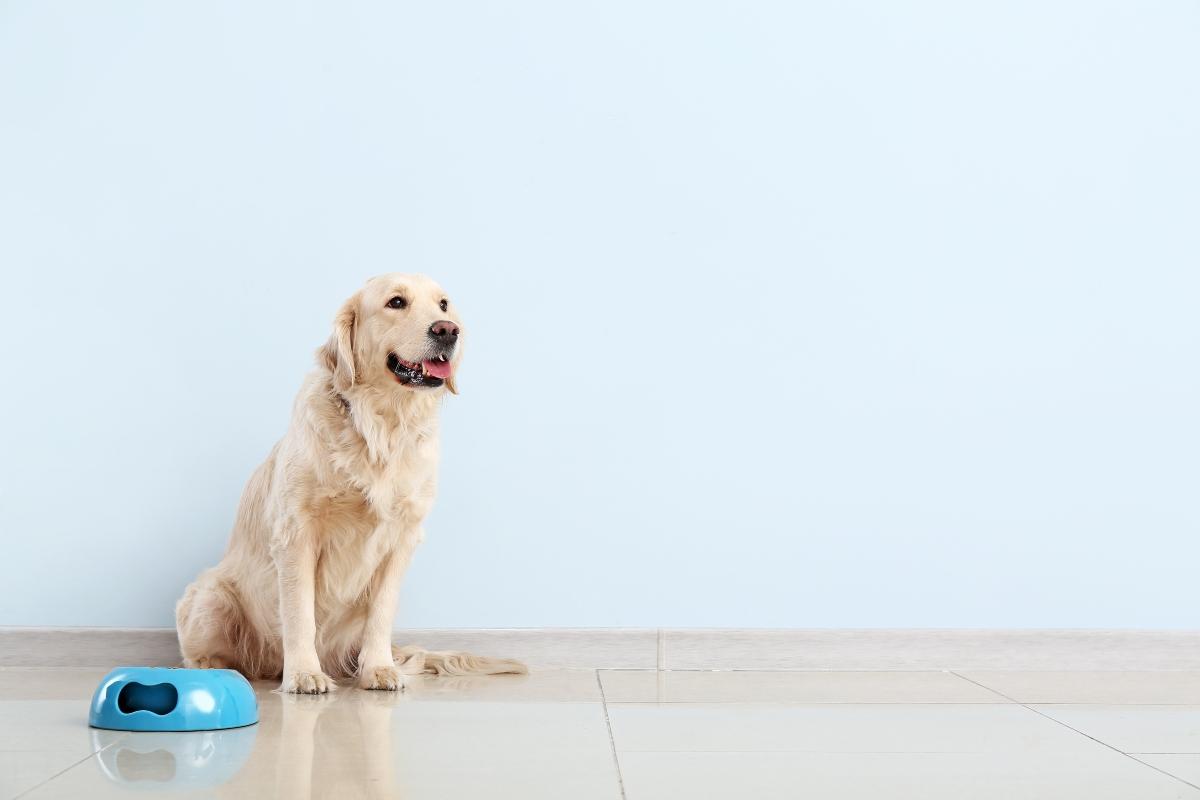 alimentazione del cane: meglio cibo industriale o casalingo? guida per una dieta equilibrata
