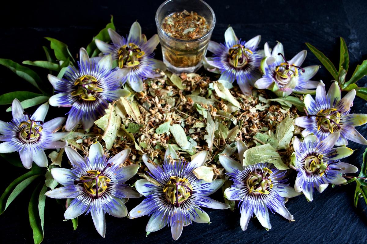 passiflora: benefici per la salute