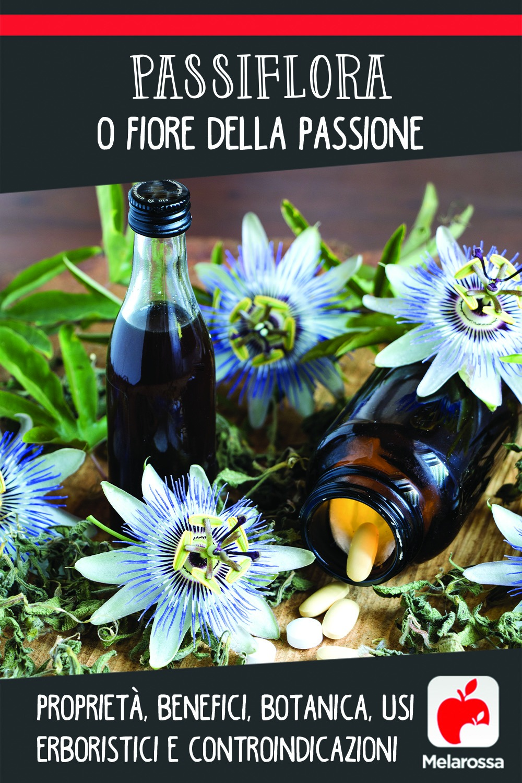 passiflora: usi,benefici e controindicazioni