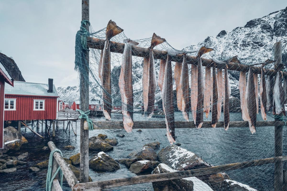 stoccafisso: lavorazione pesce