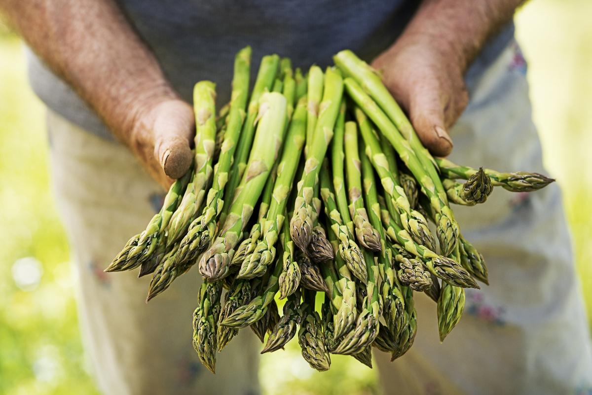 asparagi: guida all'acquisto
