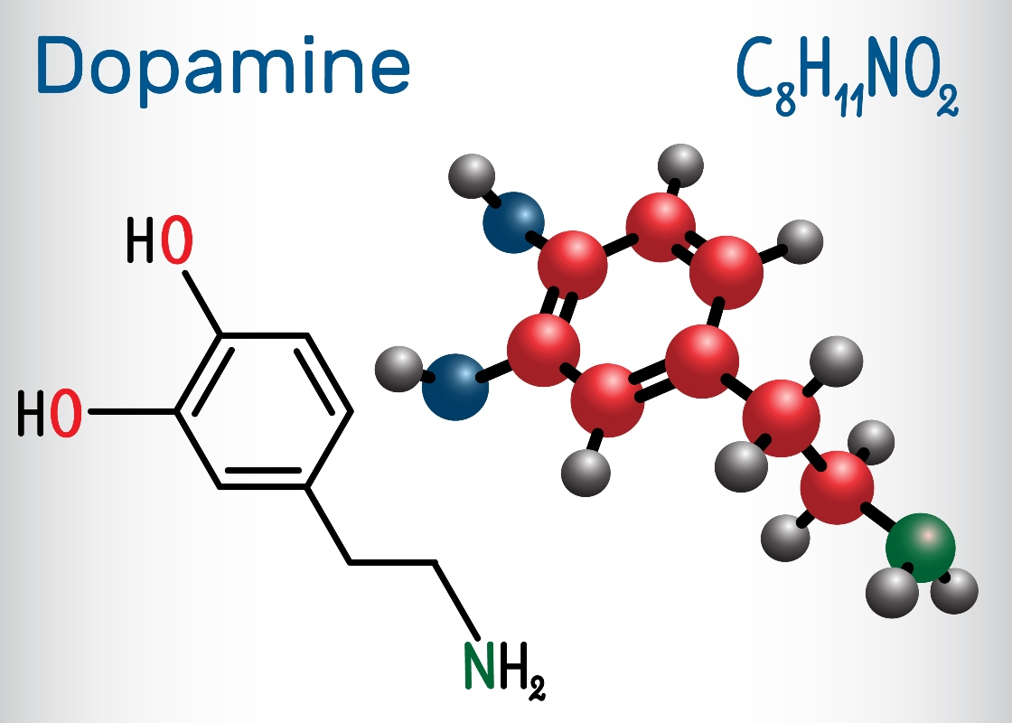 dopamina: cos'è e come funziona