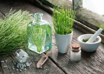 equiseto: cos'è, usi, benefici, controindicazioni e botanica