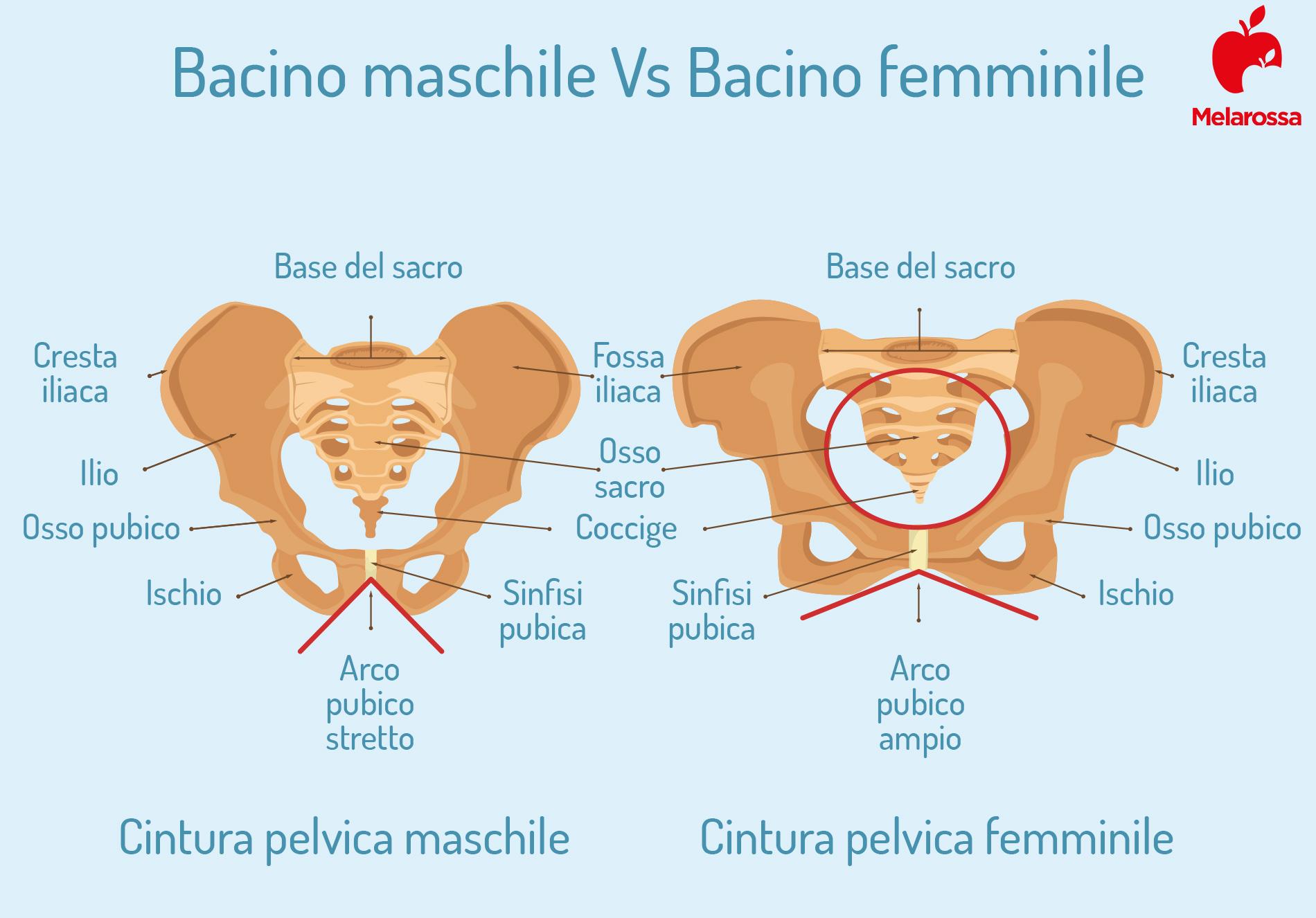 perineo maschile e femminile