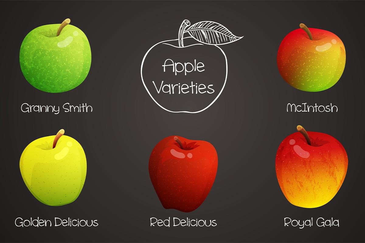varietà delle mele: stagionalità e usi