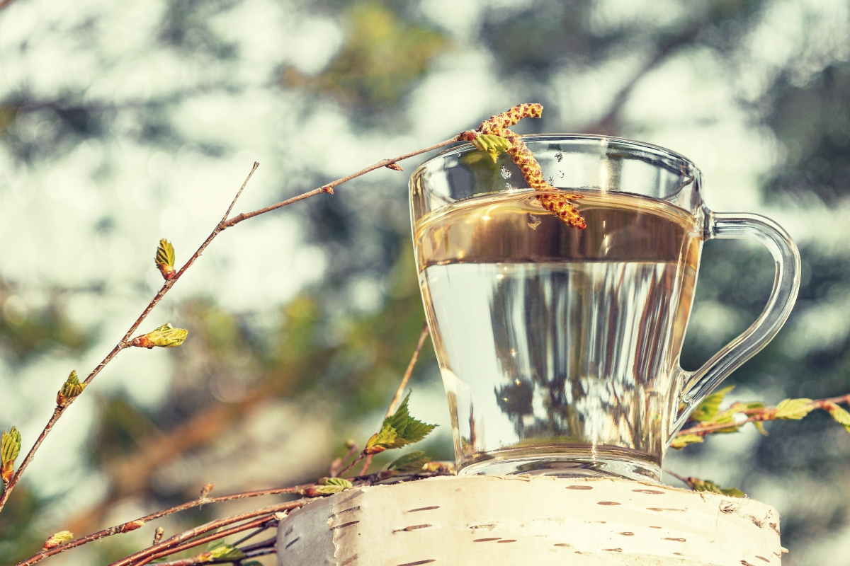 linfa di betulla: benefici e effetto detox