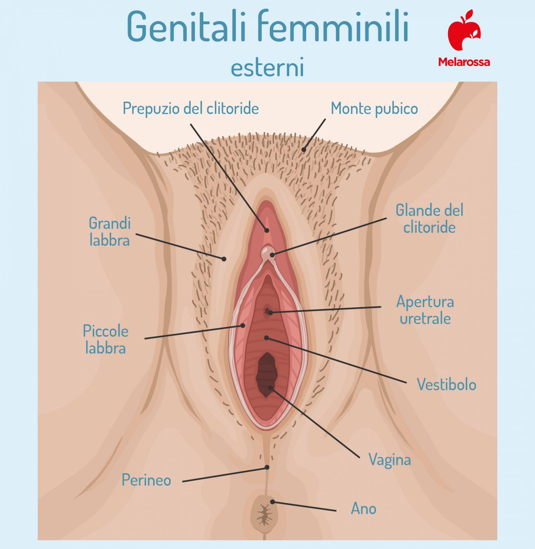 massaggio perineale: dove si trova  il perineo