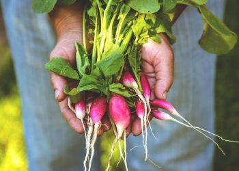 ravanelli. cosa sono, valorie nutrizionali, benefici, ricette