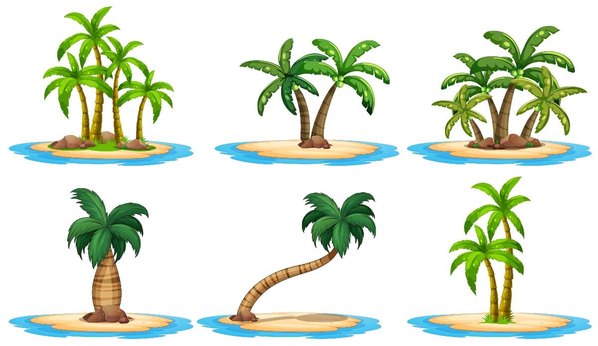 albero del cocco: varietà