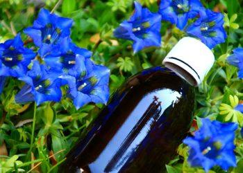 genziana: cos'è benefici, usi, liquore e controindicazioni