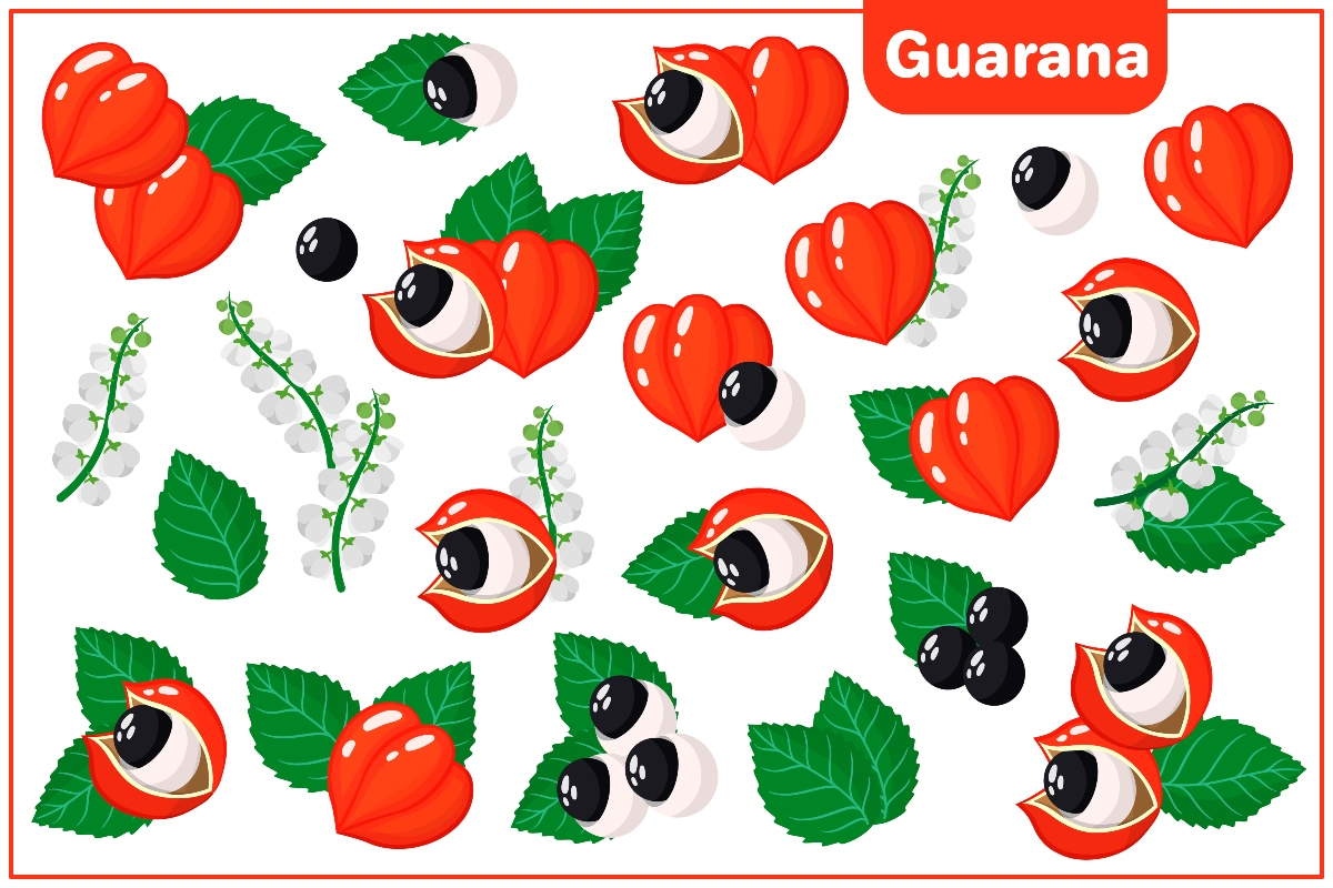 guaranà: cenni storici