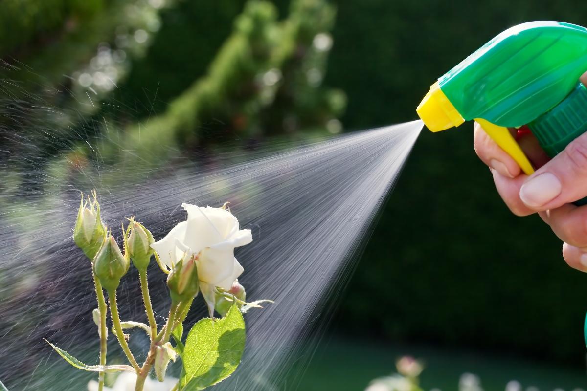 olio di neem: antiparassitario naturale
