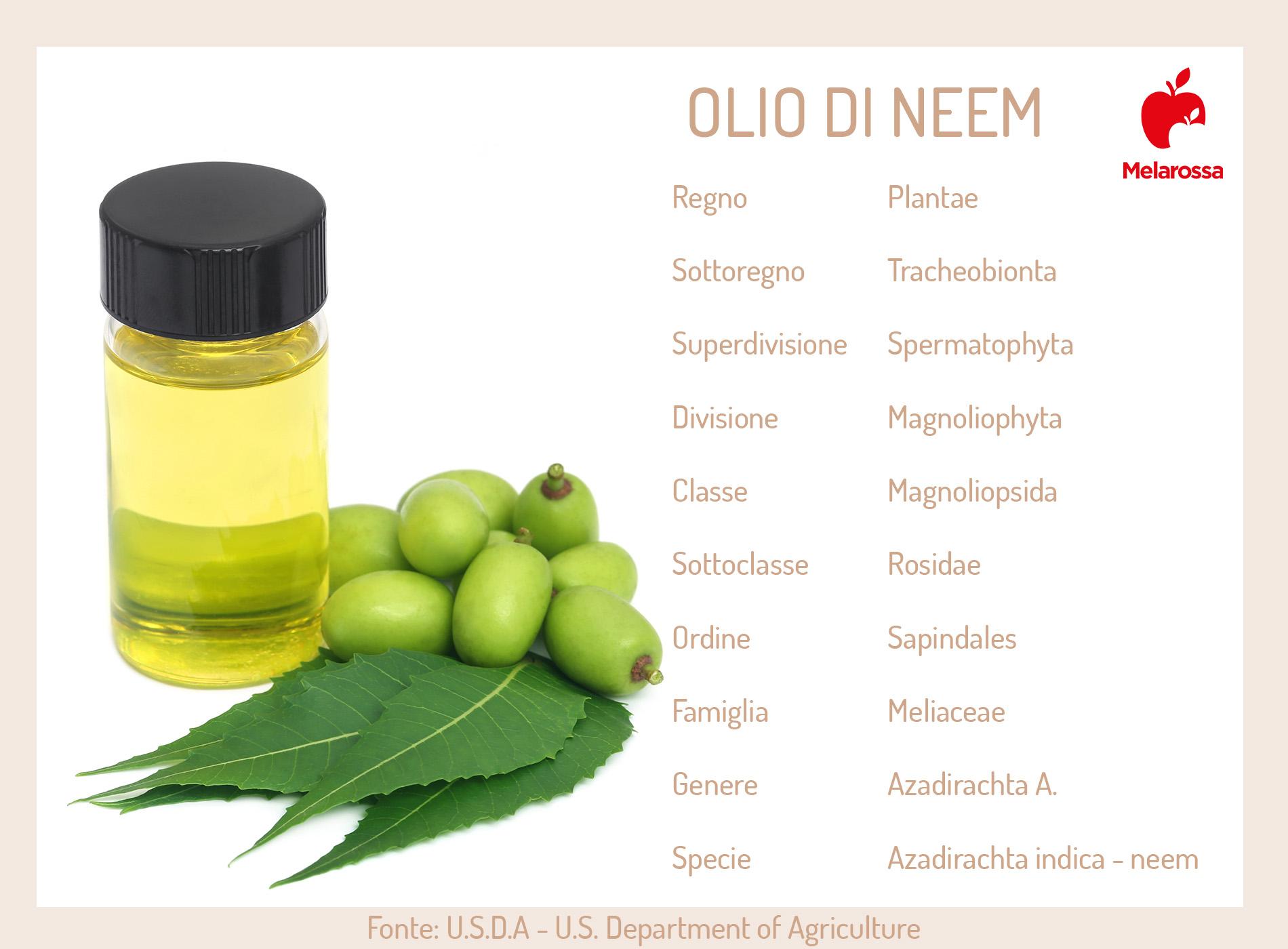 olio di neem cos'è