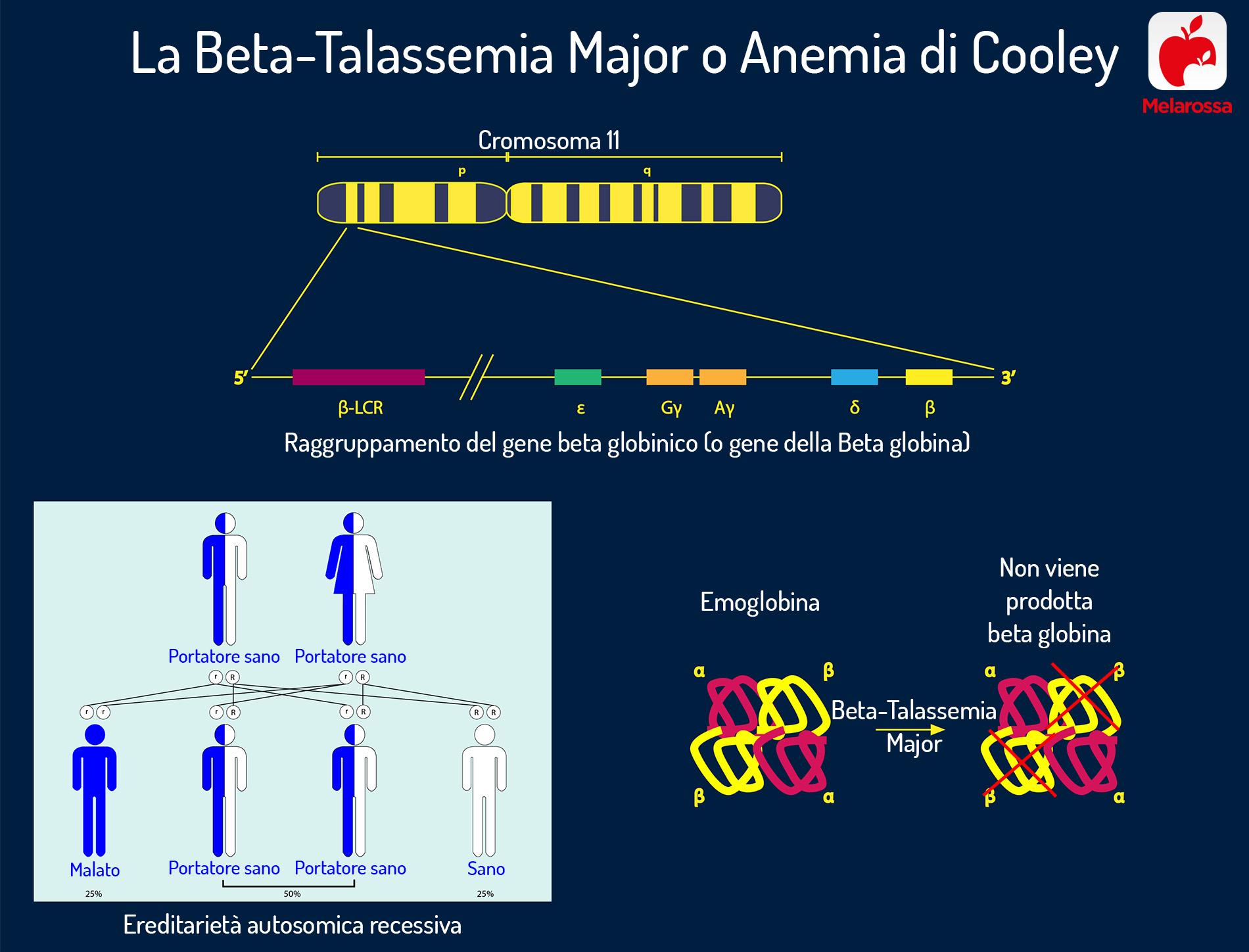 anemia mediterranea: portatore sano
