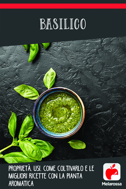 basilico: cos'è, usi e valori nutrizionali, come coltivarlo e le migliori ricette