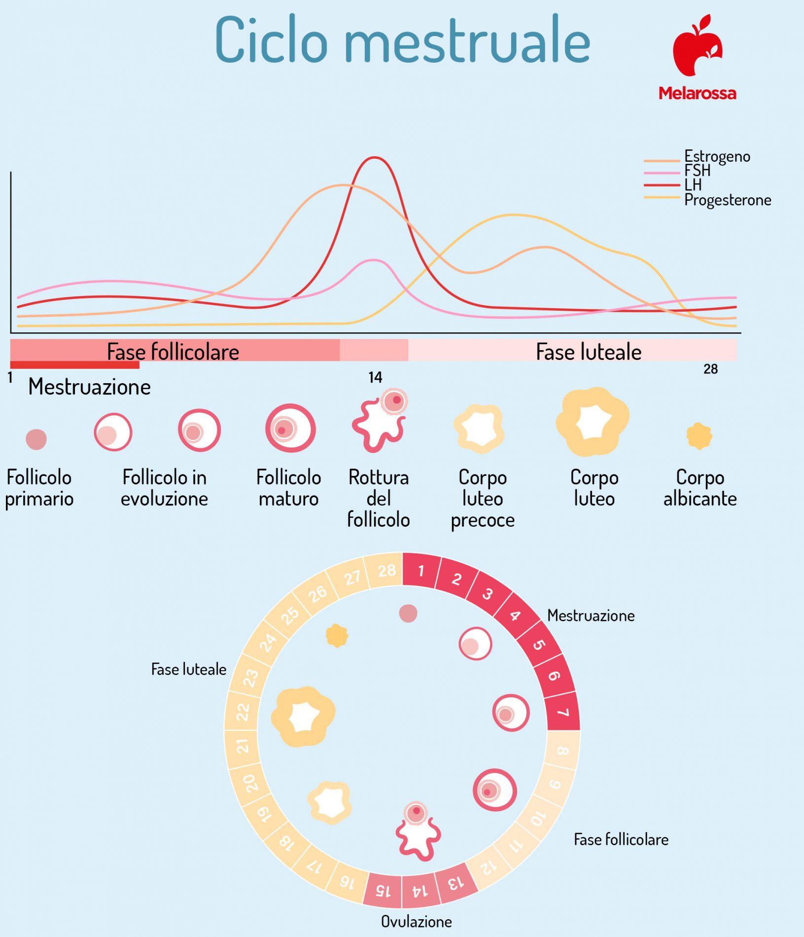 progesterone durante il ciclo mestruale
