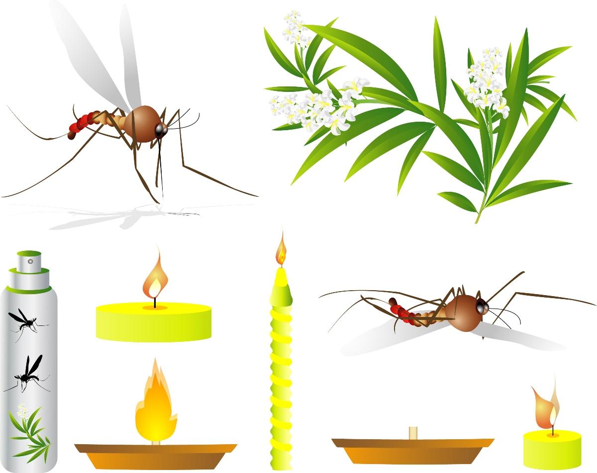 punturi di insetti: rimedi naturali