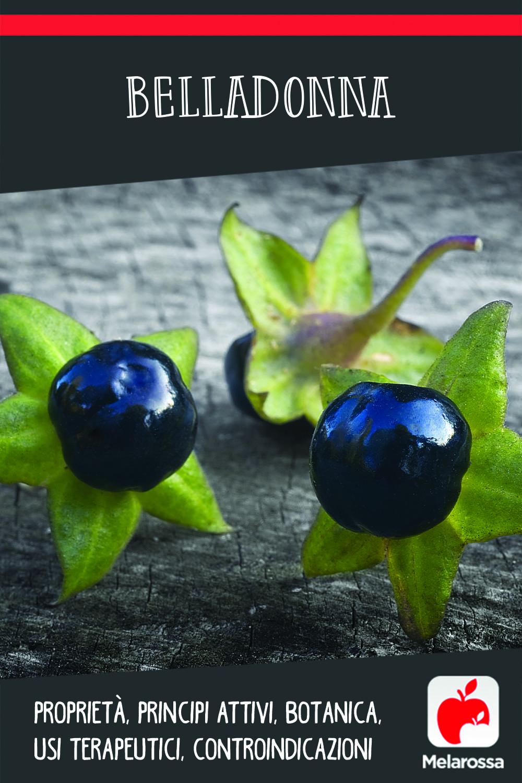Belladonna: proprietà, principi attivi, botanica, usi terapeutici, controindicazioni