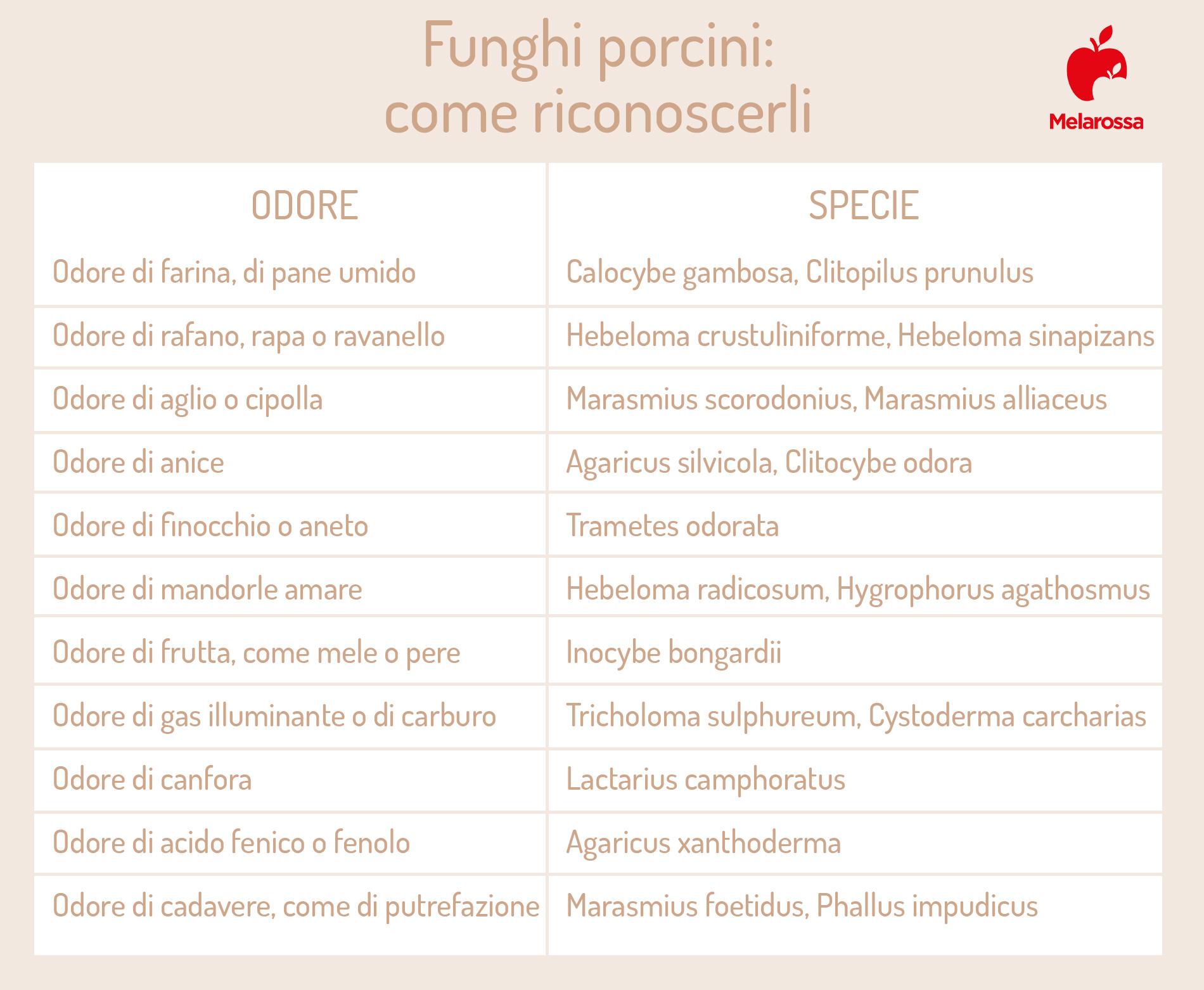 funghi porcini: come riconoscerli