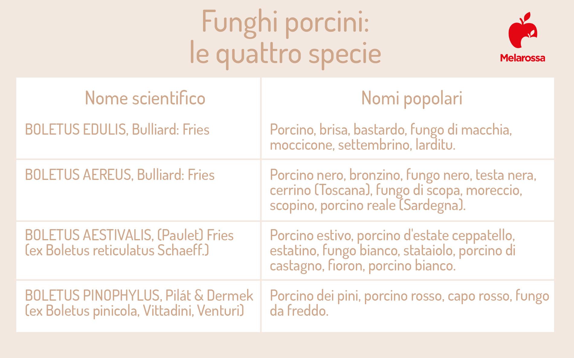 funghi porcini: specie