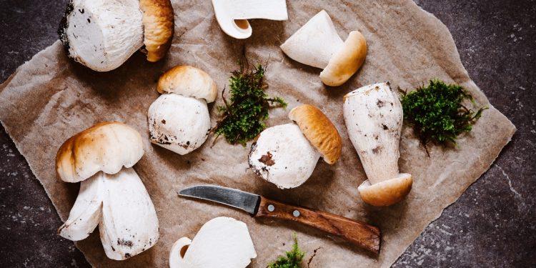 funghi porcini: tipologie, raccolta, dove trovarli, come cucinarli, ricette